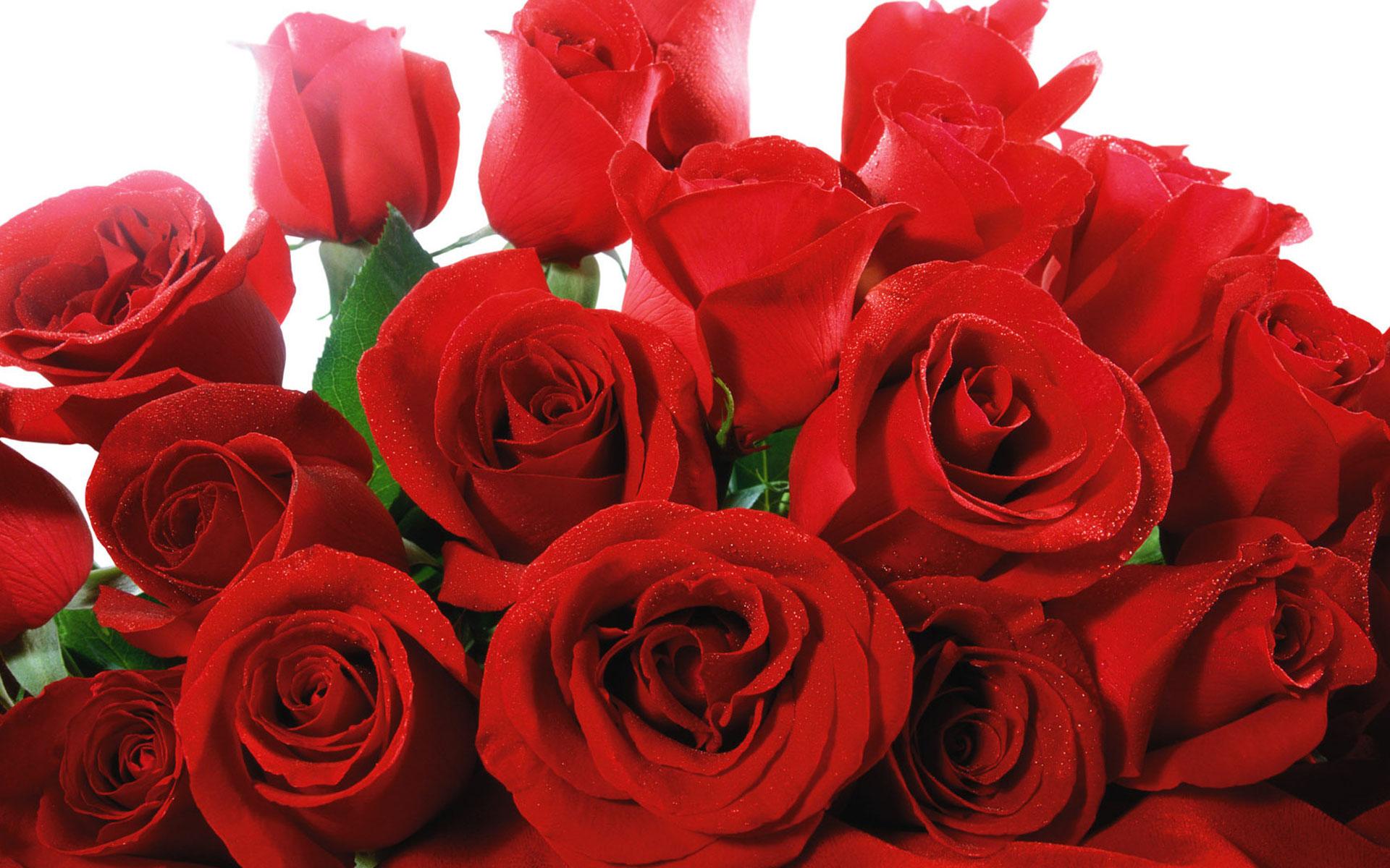 Букет красных роз на открытку